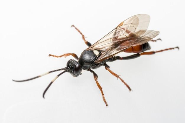 날개 달린 된 화려한 곤충의 클로즈업