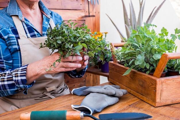 ミントとハーブの植物でガーデニングしながらエプロンでカジュアルな服を着た女性のクローズアップ。木製のテーブルと背景、ガーデニングツール。自然への愛、コンセプト