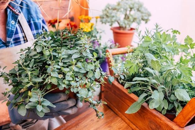 ミントとハーブの植物でガーデニングしながらカジュアルな服を着た女性のクローズアップ。木製のテーブルと背景、ガーデニングツール。自然への愛、コンセプト