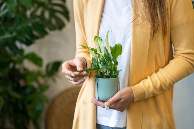 彼女の手で観葉植物を保持している女性の庭師のクローズアップ