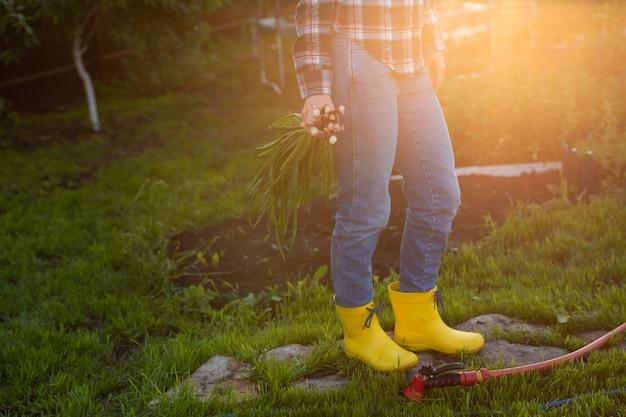 女性の庭師のクローズアップは、晴れた暖かい春の日にネギの束を保持しています。植物の世話と収穫の概念と趣味