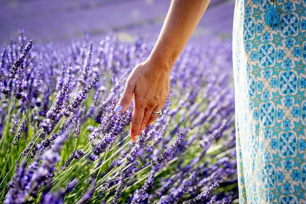 フィールド上のラベンダーの花に触れる女性の手のクローズアップ。農地で壊れやすいラベンダーの花をなでるリングを持つ女性の手