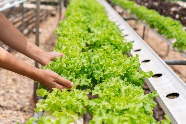 水耕栽培プラントを保持している女性の手のクローズアップ