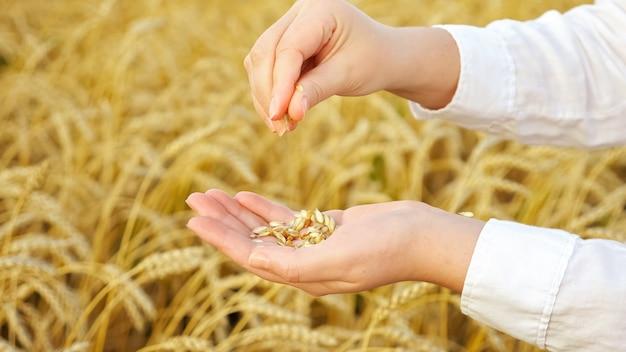 Крупный план женских рук, сортирующих пшеницу с шелухой в поле