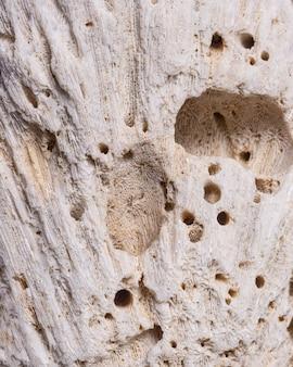 穴のある木の質感のクローズアップ