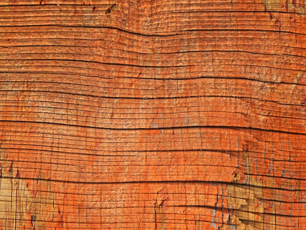 야외 나무 질감의 클로즈업