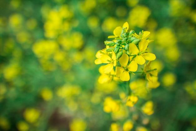 黄色い花の近く