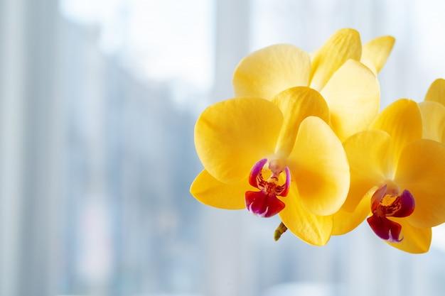 黄色の蘭の花のクローズアップ