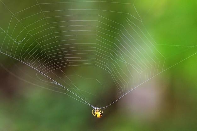 黄色の蜘蛛のクローズアップ