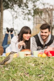 公園で緑の草の雀を見る若いカップルのクローズアップ