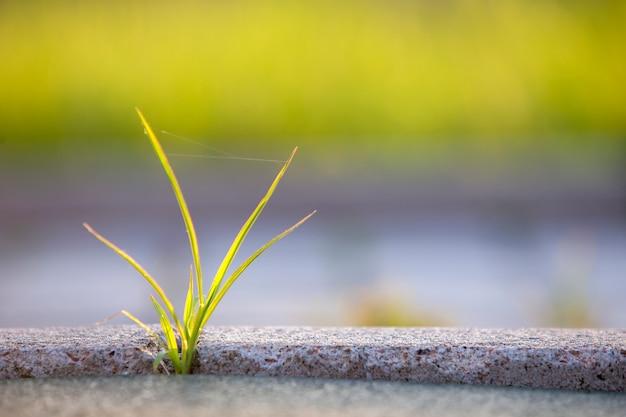 Закройте вверх молодого маленького зеленого растения начиная вырасти между бетонными плитками весной. начало новой жизненной концепции.
