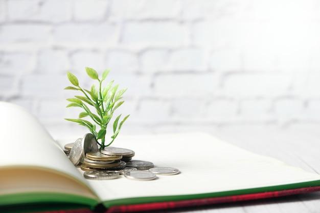 コインを通して成長する若い計画のクローズアップ。