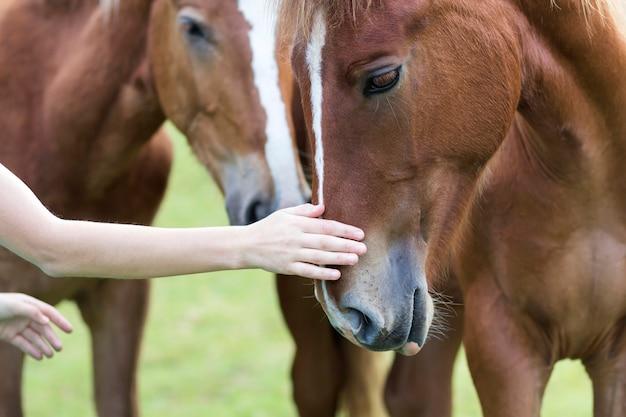 美しい栗の馬の頭を愛撫する若い女性の手のクローズアップ動物、ケア、優しさ、友情、誠実さ、農業の概念への愛。