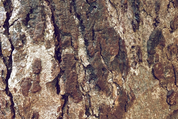 Close-up of old tree texture background