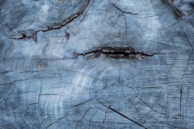 Close up old tree with cracks