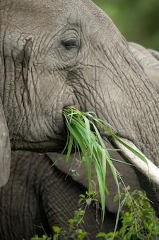 象の頭のクローズアップ