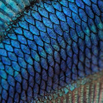 魚の皮-青いシャムトウギョ-betta splendensテクスチャ背景のクローズアップ