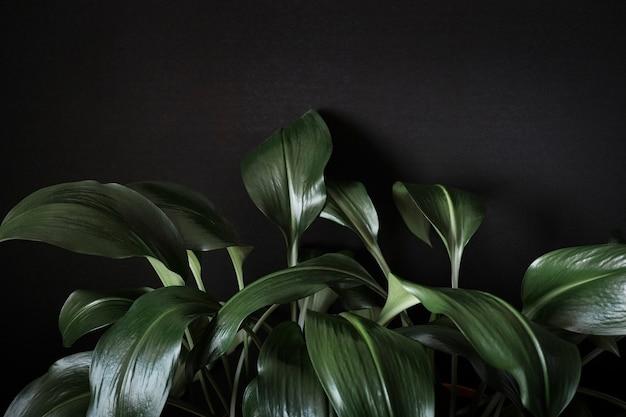 緑豊かな緑のユーカリ植物にクローズアップ
