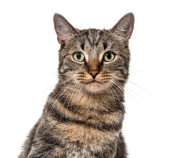 Крупный план полосатой смешанной кошки