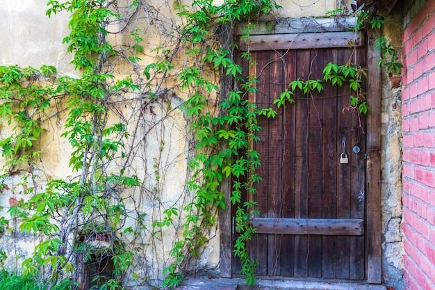 Крупным планом на винтажной белой двери садовых ворот в ряду зеленой изгороди с пространством для текста справа
