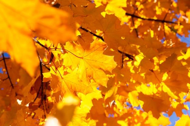 Закройте на осенней листве