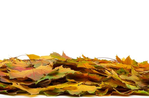 分離された秋のカエデの葉にクローズアップ