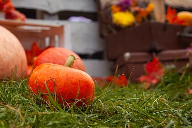 Крупным планом на осенние тыквы, лежащие на траве