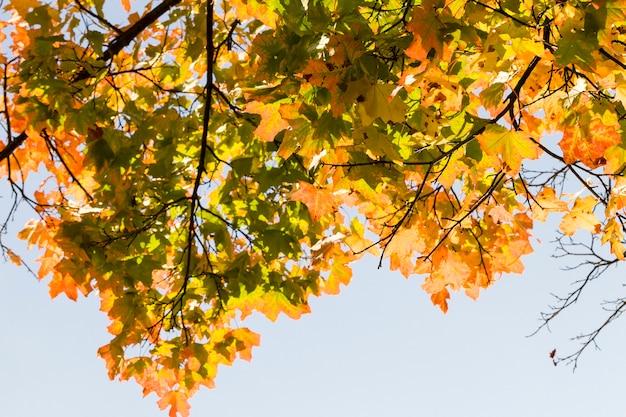Крупным планом на осенних деревьях