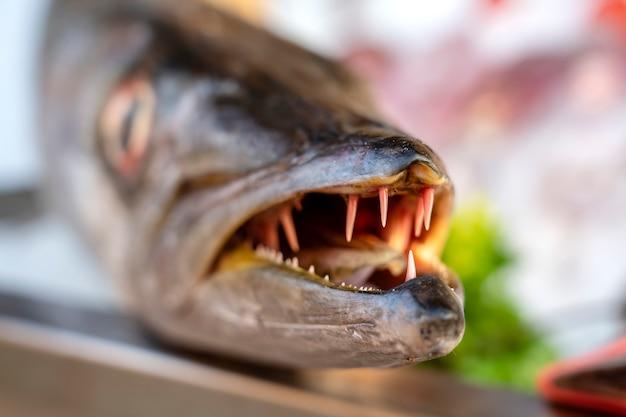 Закройте зубы барракуды. барракуда из свежей рыбы в море на рынке уличной еды в таиланде. концепция морепродуктов. сырая барракуда для приготовления