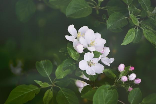 Крупным планом на красивые детали цветочной травы