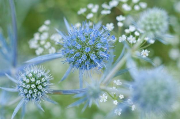 美しい花草の詳細にクローズアップ