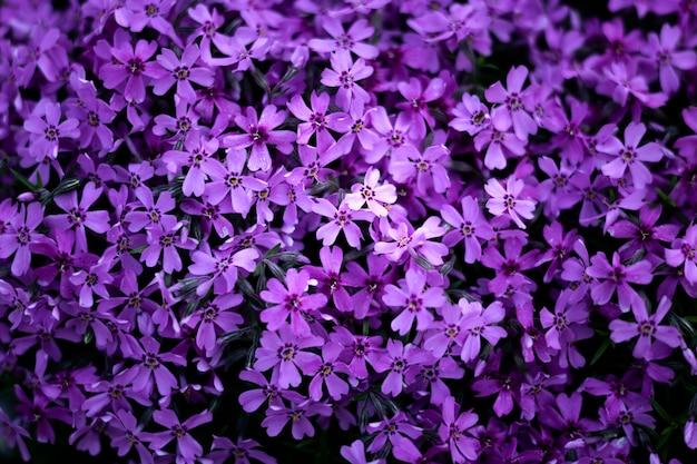 자연의 아름다운 꽃 세부 사항에 가까이 프리미엄 사진
