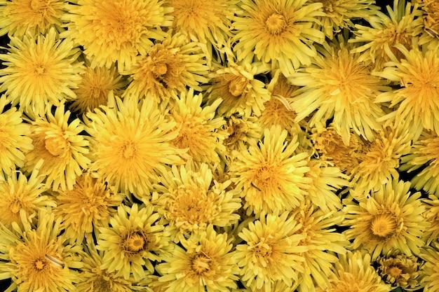 Крупным планом на красивые детали цветов в природе