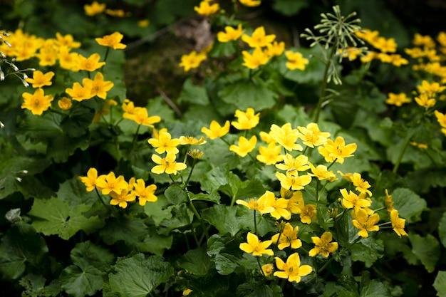 자연의 아름다운 꽃 세부 사항에 가까이 무료 사진