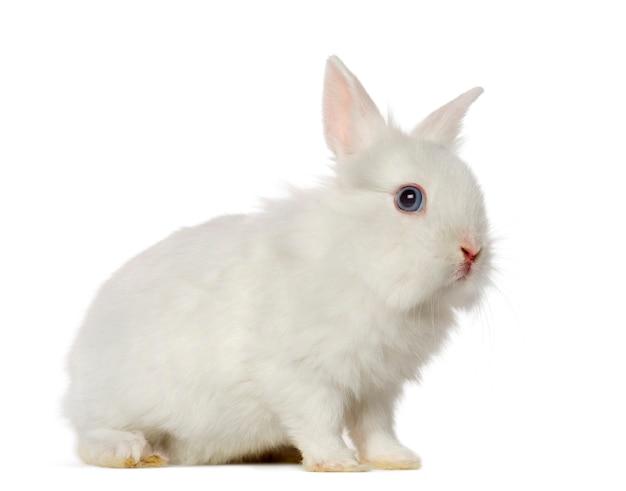 Крупным планом на красивый кролик изолированы
