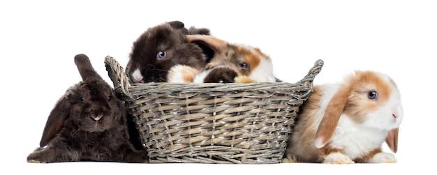 Крупным планом на красивых кроликов изолированы