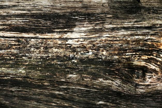 美しい木の樹皮のテクスチャにクローズアップ