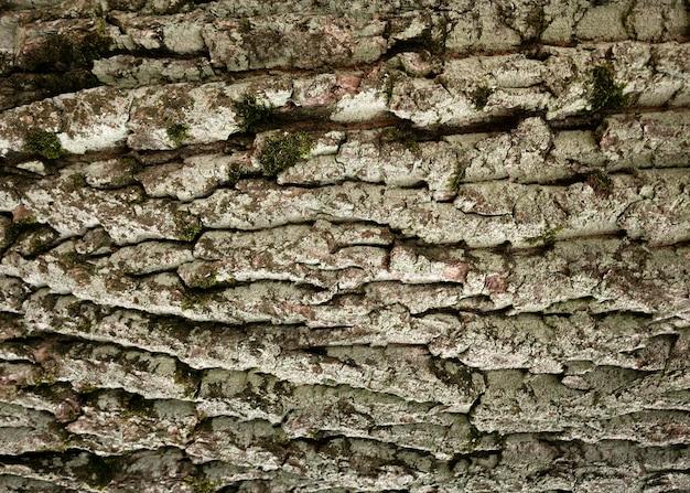 아름 다운 나무 껍질 질감에 가까이