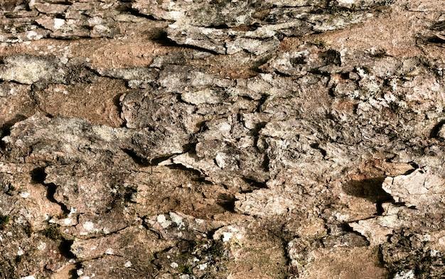 아름 다운 나무 껍질 질감에 가까이 무료 사진