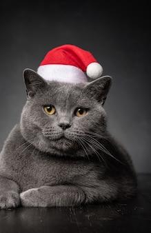 Крупным планом на красивый молодой пухлый кот в шляпе санта