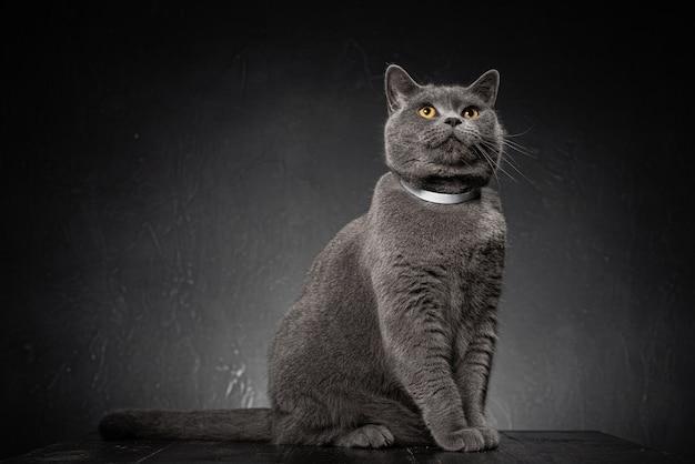 Крупным планом на красивый молодой пухлый кот