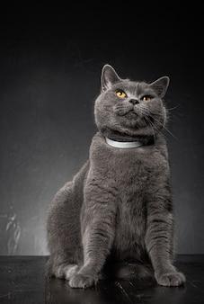 Крупным планом на красивый молодой пухлый кот Premium Фотографии