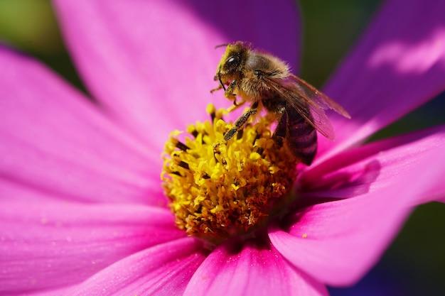 ピンクの花に着陸する蜂のクローズアップ