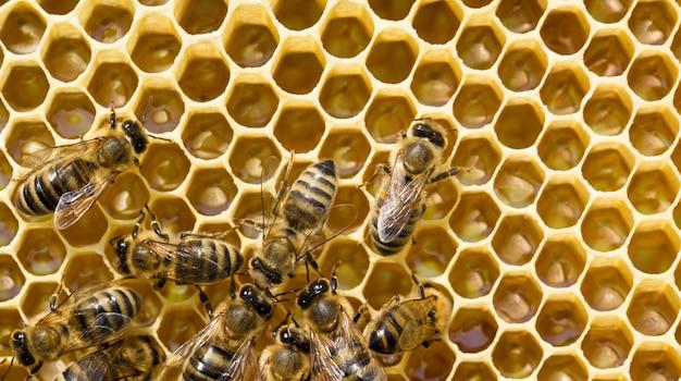 Крупным планом пчелы, роящиеся в сотах