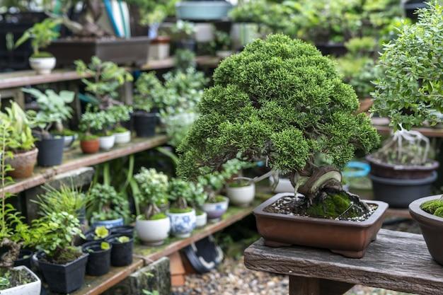 他の植物に囲まれた盆栽の木にクローズアップ