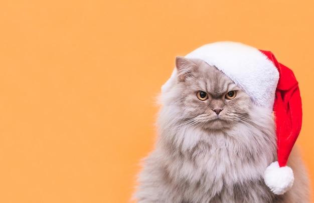 Крупным планом на кота в новогодней шапке изолированы