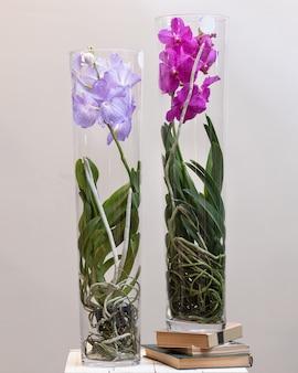 Крупным планом красочные сингапурские орхидеи и орхидеи ванда в стеклянных горшках