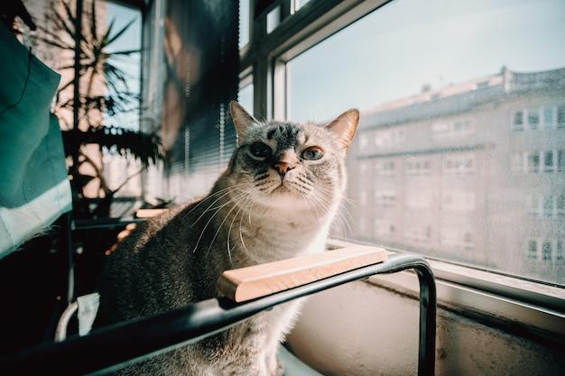 好奇心が強い猫を椅子にクローズアップ