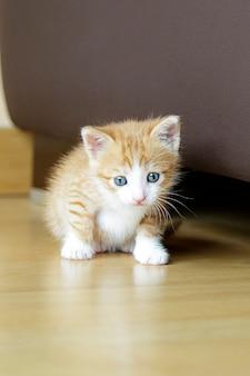家に座っているかわいい生姜子猫にクローズアップ
