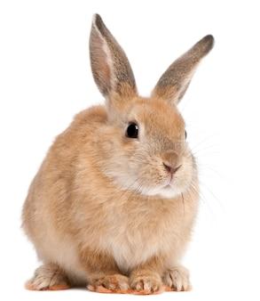 孤立したかわいいウサギにクローズアップ